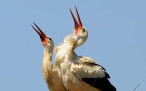 stork-1205411